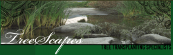 Treescapes, Inc. logo