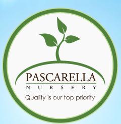 Pascarella Nursery logo